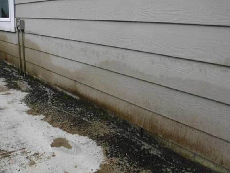 Algae and mold growing on the siding due to poor drainage