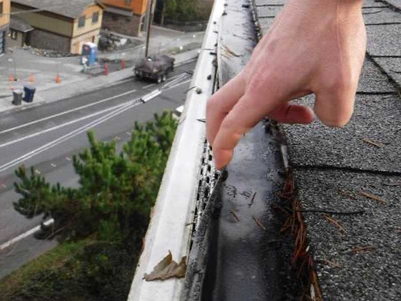 The algae has permeated the mesh and is on the filter under and in the gutters themselves.