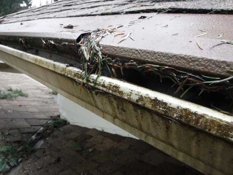 Great shot of gutter helmet and fir needles up close on the roof in Lynnwood, Washington.