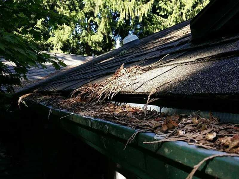 Gutters full to the top with evergreen 'leaves' an debris.