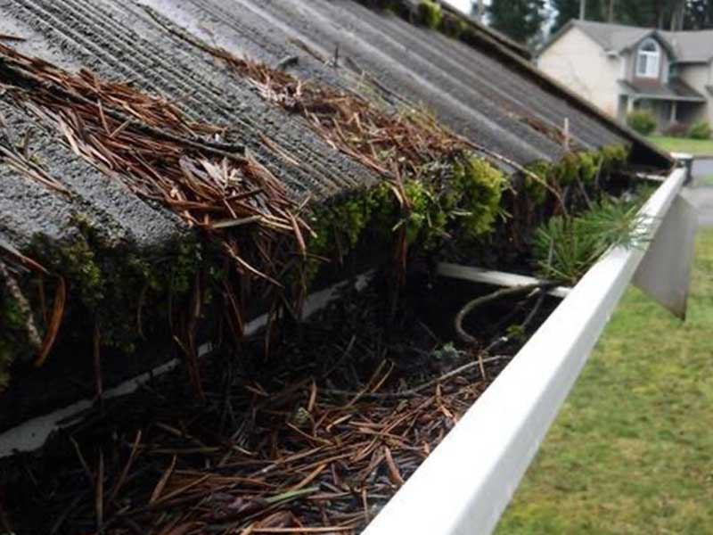 Gutters in Lacey, WA full of needles from the neighbors' trees.