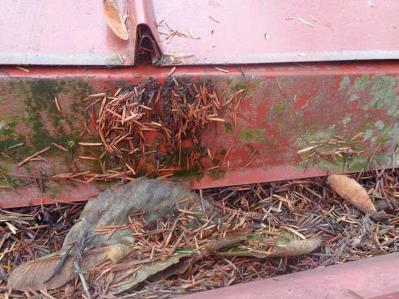 Gutter full to the top with needles in Monroe