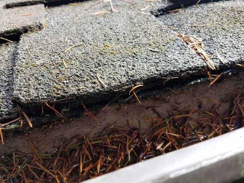 Open gutters filled with needles in Port Townsend