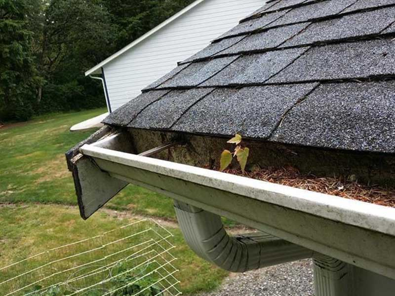 Weeds should not be growing in the gutters