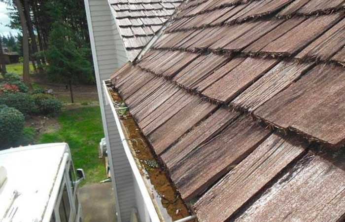 gutters with stagnant water