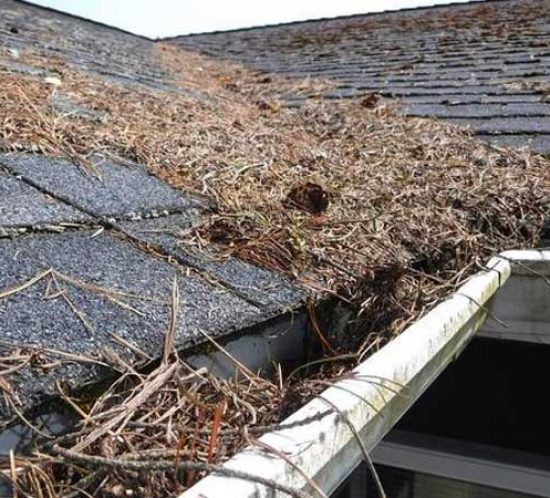 Roof with needles and debris